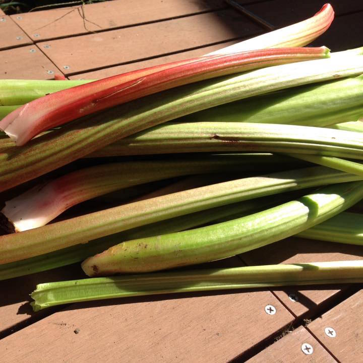 Rhubarb, 100 grams